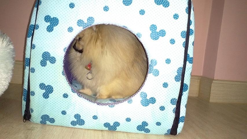 ซาลีฟบอกง่วงล่ะ...เข้านอนในบ้านดีกว่า บ้านหมานุ่มๆ