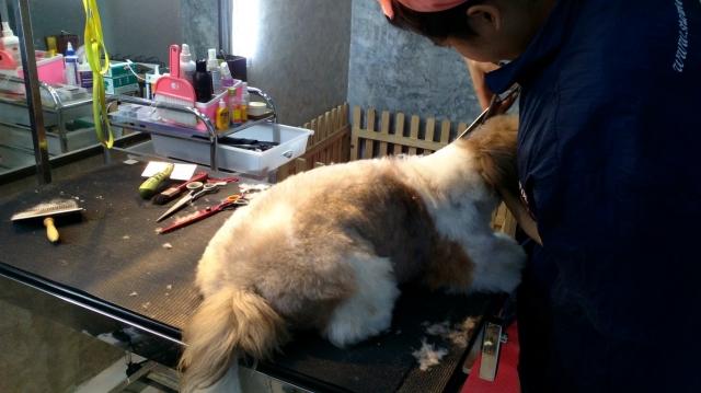 อาบน้ำตัดขนน้องหมาไม่ใช่เรื่องง่ายอย่างที่คุณคิด